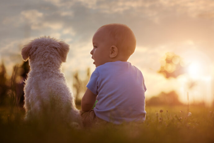 hund und baby, hund an baby gewöhnen, kinderliebe hunderassen