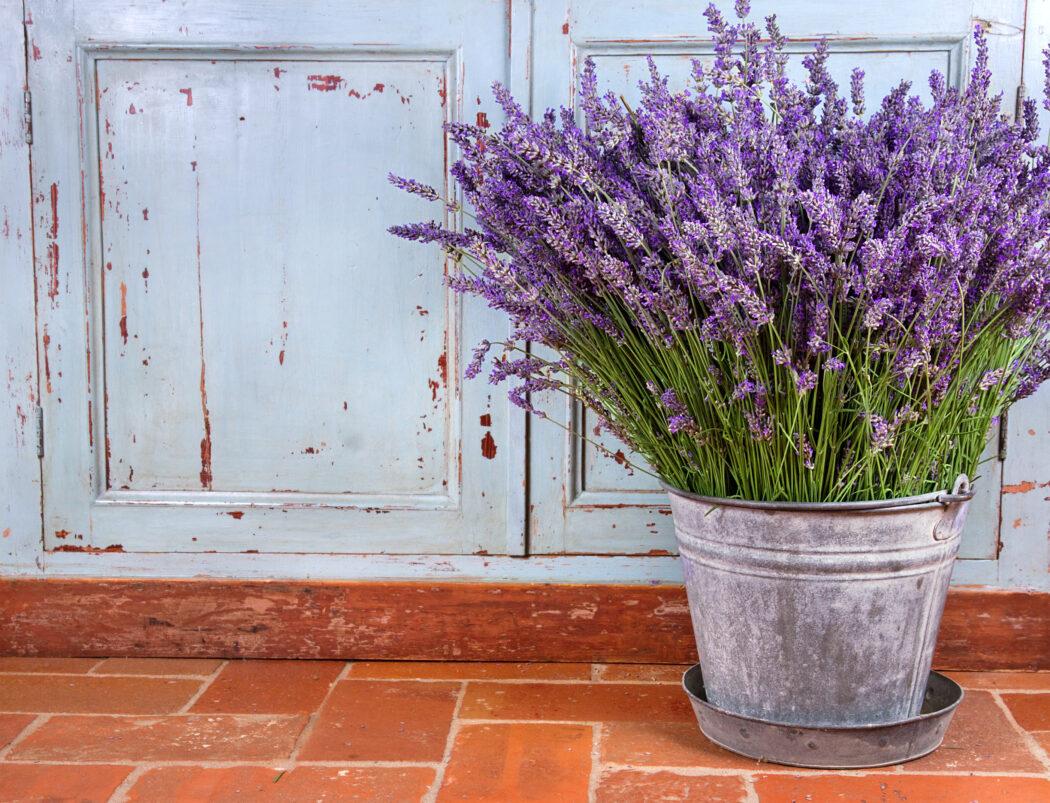 lavendel ungiftige pflanze fuer kinder garten kräuter balkon